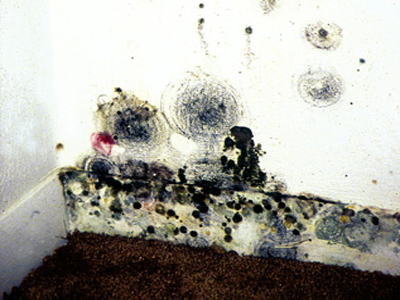 http://www.epa.gov/mold/mold_remediation.html