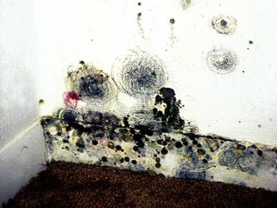 http://www.epa.gov/mold/mold_remediation.html